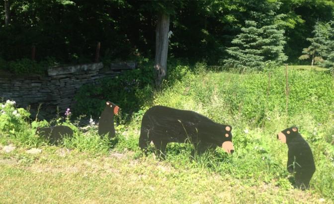 Finger Lakes - Bears